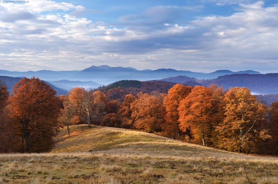 All colors of autumn in the Ukrainian Carpathians, photo 18
