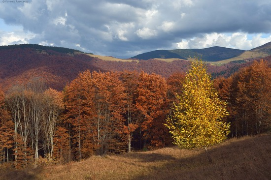 All colors of autumn in the Ukrainian Carpathians, photo 19