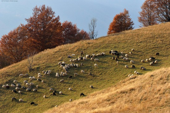 All colors of autumn in the Ukrainian Carpathians, photo 20