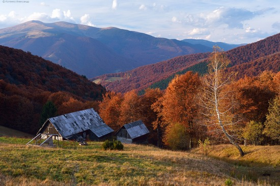 All colors of autumn in the Ukrainian Carpathians, photo 21
