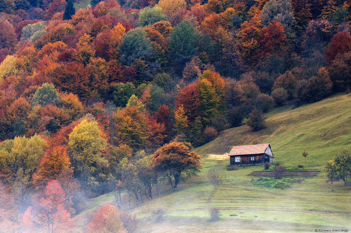 All colors of autumn i...