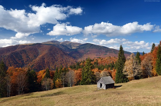 All colors of autumn in the Ukrainian Carpathians, photo 5