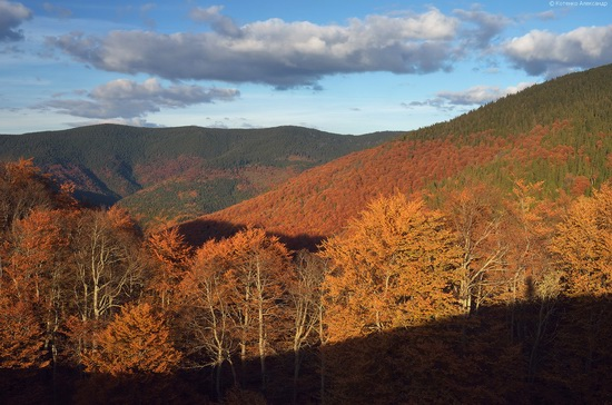 All colors of autumn in the Ukrainian Carpathians, photo 7