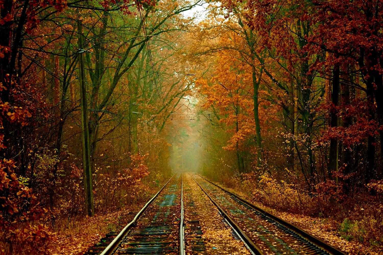 autumn and the kyiv tram  u2013 an amazing combination