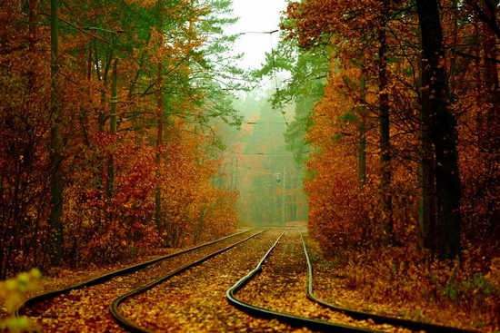 Autumn, the Kyiv Tram, Ukraine, photo 6