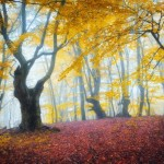 Fairy-tale forest on Demerdzhi in the Crimea
