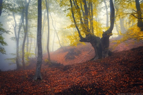 Fairy-tale forest on Demerdzhi in the Crimea, photo 2