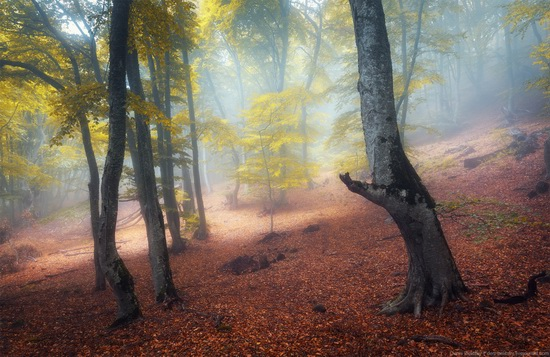 Fairy-tale forest on Demerdzhi in the Crimea, photo 3