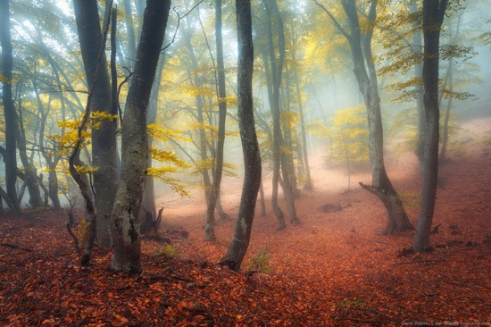Fairy-tale forest on Demerdzhi in the Crimea, photo 4