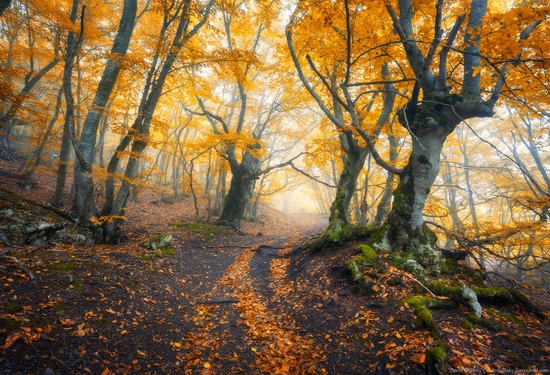 Fairy-tale forest on Demerdzhi in the Crimea, photo 6