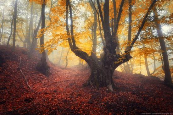 Fairy-tale forest on Demerdzhi in the Crimea, photo 7
