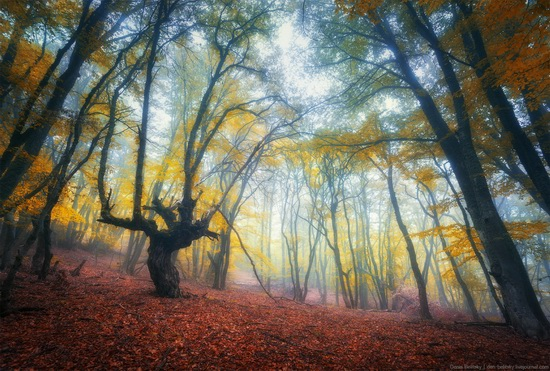 Fairy-tale forest on Demerdzhi in the Crimea, photo 8