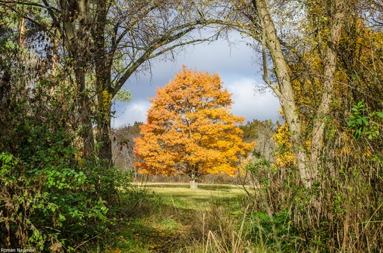 Golden Autumn in Alexandria Dendrological Park, Bila Tserkva, Ukraine, photo 15