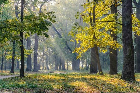 Golden Autumn in Alexandria Dendrological Park, Bila Tserkva, Ukraine, photo 16