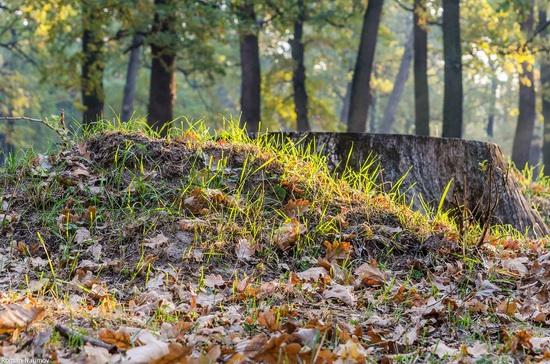 Golden Autumn in Alexandria Dendrological Park, Bila Tserkva, Ukraine, photo 17