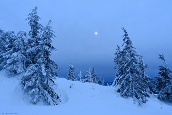 Winter fairytale of the Ukrainian Carpathians, photo 10