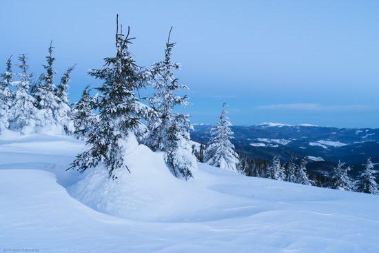 Winter fairytale of the Ukrainian Carpathians, photo 11