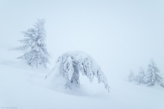 Winter fairytale of the Ukrainian Carpathians, photo 2