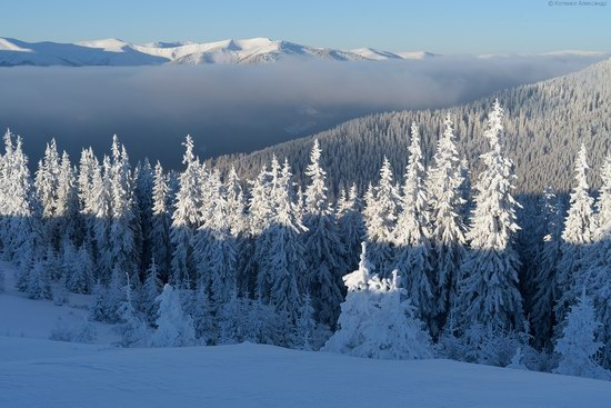 Winter fairytale of the Ukrainian Carpathians, photo 24