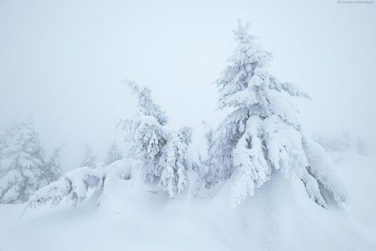Winter fairytale of the Ukrainian Carpathians, photo 3