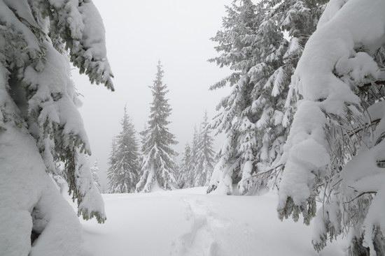 Winter fairytale of the Ukrainian Carpathians, photo 4