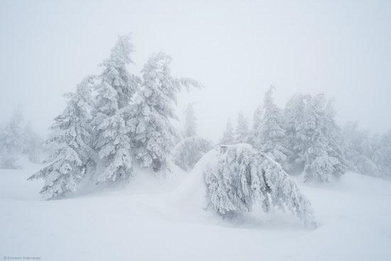 Winter fairytale of the Ukrainian Carpathians, photo 5