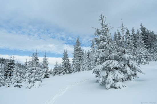 Winter fairytale of the Ukrainian Carpathians, photo 6