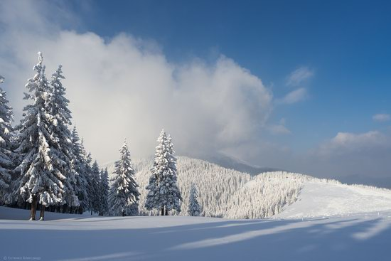 The mountain ranges of Gorgany in winter, Carpathians, Ukraine, photo 11