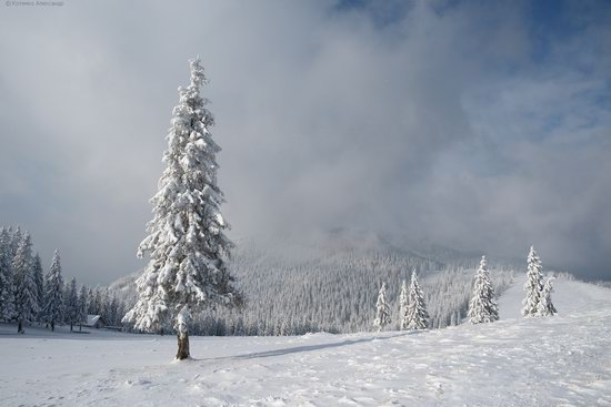 The mountain ranges of Gorgany in winter, Carpathians, Ukraine, photo 12