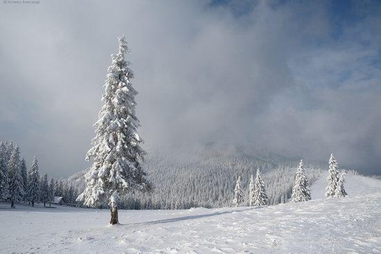 The mountain ranges of Gorgany in winter, Carpathians, Ukraine, photo 12