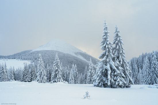 The mountain ranges of Gorgany in winter, Carpathians, Ukraine, photo 13