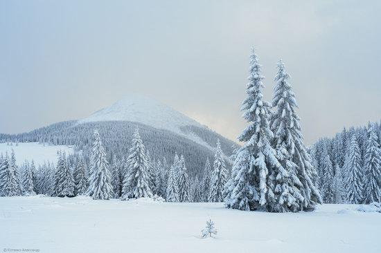 The mountain ranges of Gorgany in winter, Carpathians, Ukraine, photo 13