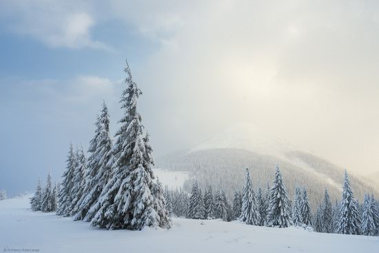 The mountain ranges of Gorgany in winter, Carpathians, Ukraine, photo 14