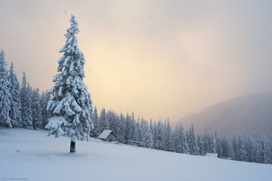 The mountain ranges of Gorgany in winter, Carpathians, Ukraine, photo 15