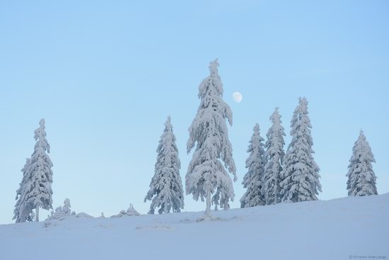 The mountain ranges of Gorgany in winter, Carpathians, Ukraine, photo 16