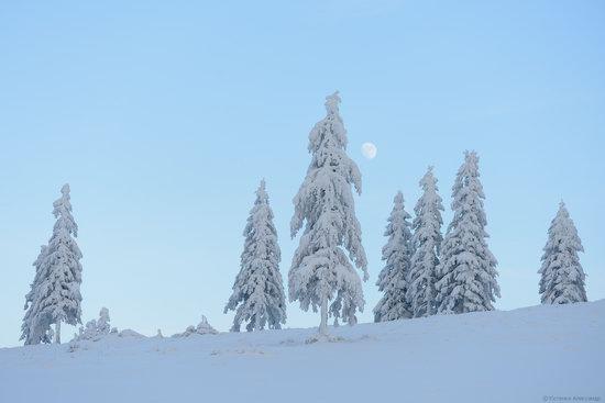 The mountain ranges of Gorgany in winter, Carpathians, Ukraine, photo 16