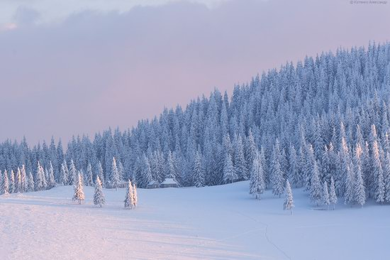 The mountain ranges of Gorgany in winter, Carpathians, Ukraine, photo 17
