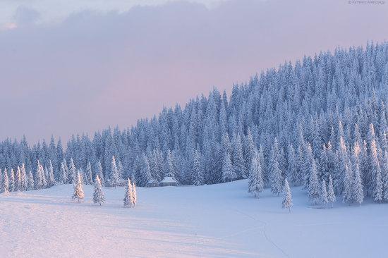 The mountain ranges of Gorgany in winter, Carpathians, Ukraine, photo 17