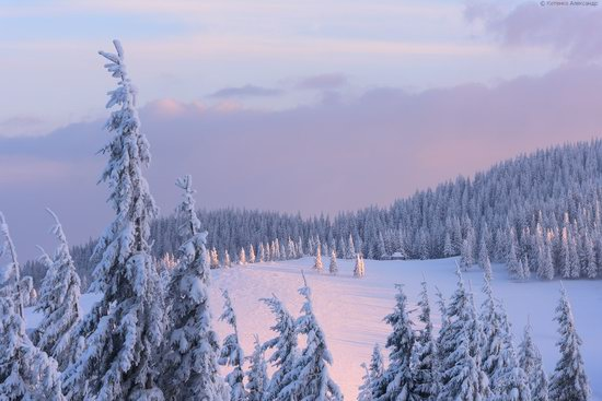 The mountain ranges of Gorgany in winter, Carpathians, Ukraine, photo 18