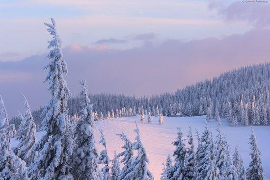 The mountain ranges of Gorgany in winter, Carpathians, Ukraine, photo 18