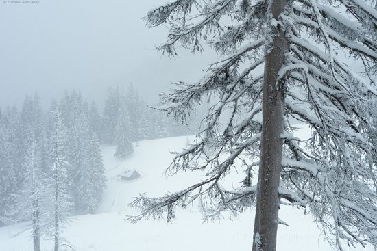 The mountain ranges of Gorgany in winter, Carpathians, Ukraine, photo 2