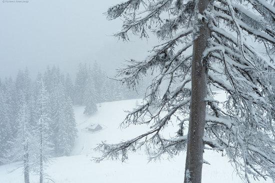 The mountain ranges of Gorgany in winter, Carpathians, Ukraine, photo 2