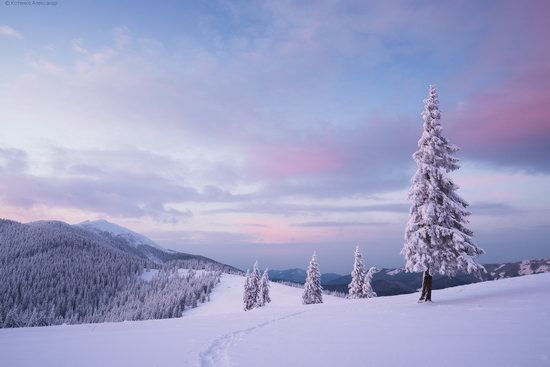 The mountain ranges of Gorgany in winter, Carpathians, Ukraine, photo 23