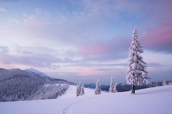 The mountain ranges of Gorgany in winter, Carpathians, Ukraine, photo 23