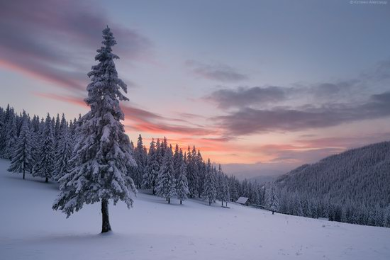 The mountain ranges of Gorgany in winter, Carpathians, Ukraine, photo 24