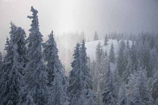 The mountain ranges of Gorgany in winter, Carpathians, Ukraine, photo 3