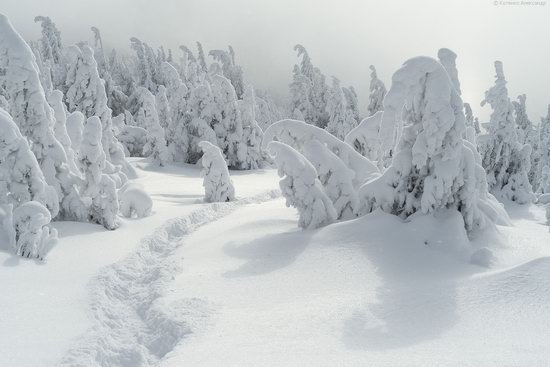 The mountain ranges of Gorgany in winter, Carpathians, Ukraine, photo 7