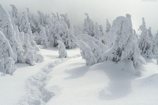 The mountain ranges of Gorgany in winter, Carpathians, Ukraine, photo 7