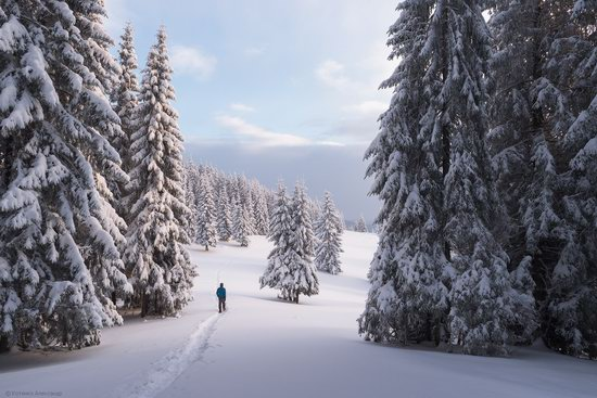 The mountain ranges of Gorgany in winter, Carpathians, Ukraine, photo 9