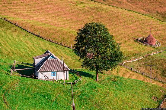 Yellow-green world of the Carpathians during haymaking, Ukraine, photo 10